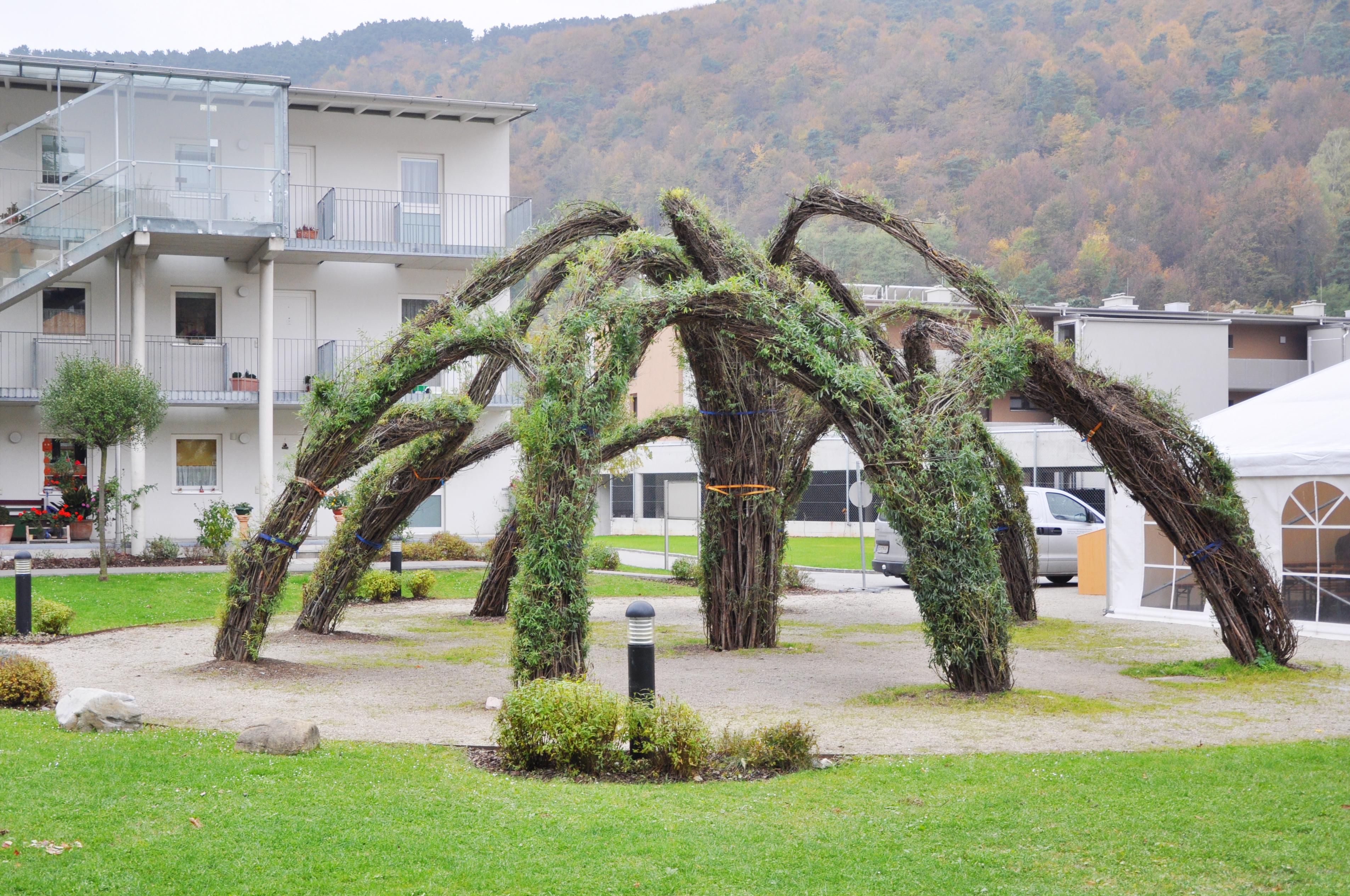 Weidendom in Krems Rehberg